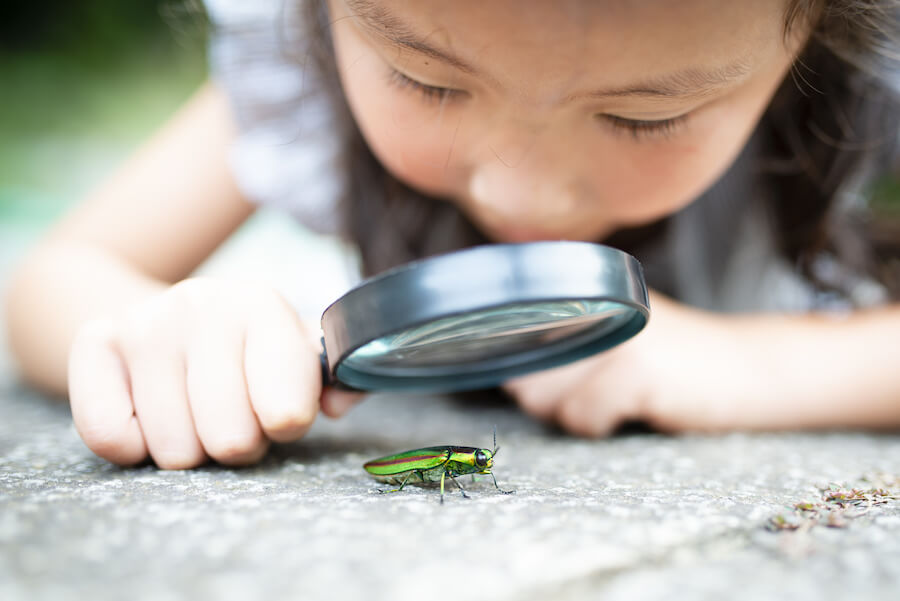 Nurturing Curiosity in Children